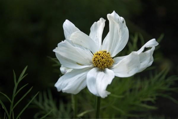 just a flower 8