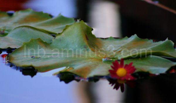 water, blue, reflection, green, flower