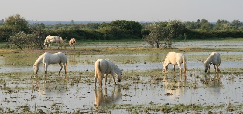 Tel cheval qui boit à la fontaine - Plant & Nature Photos - fabrice's  Photoblog