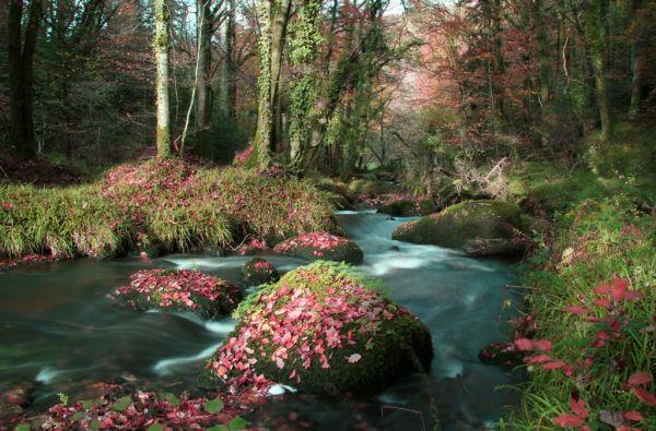 La Rivière de Cassis