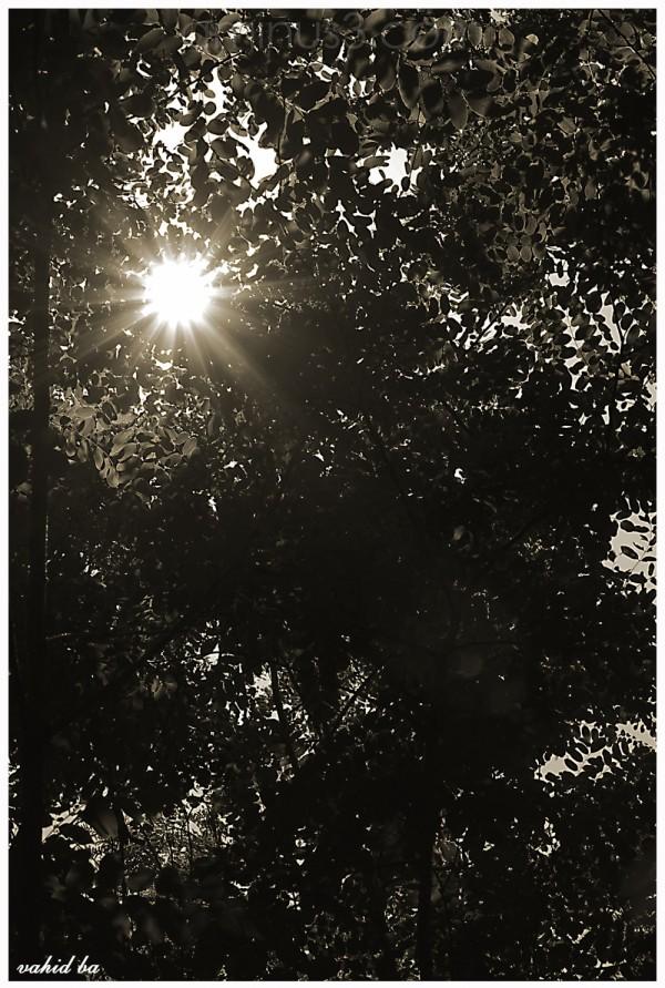 نور امید
