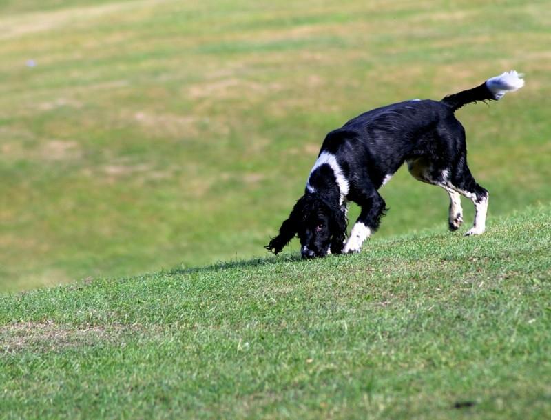 dog, park,