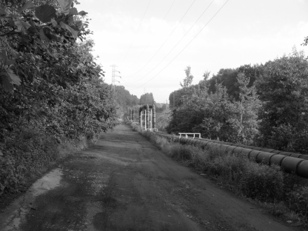 rail road, road,trees