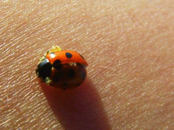 Ladybird :))