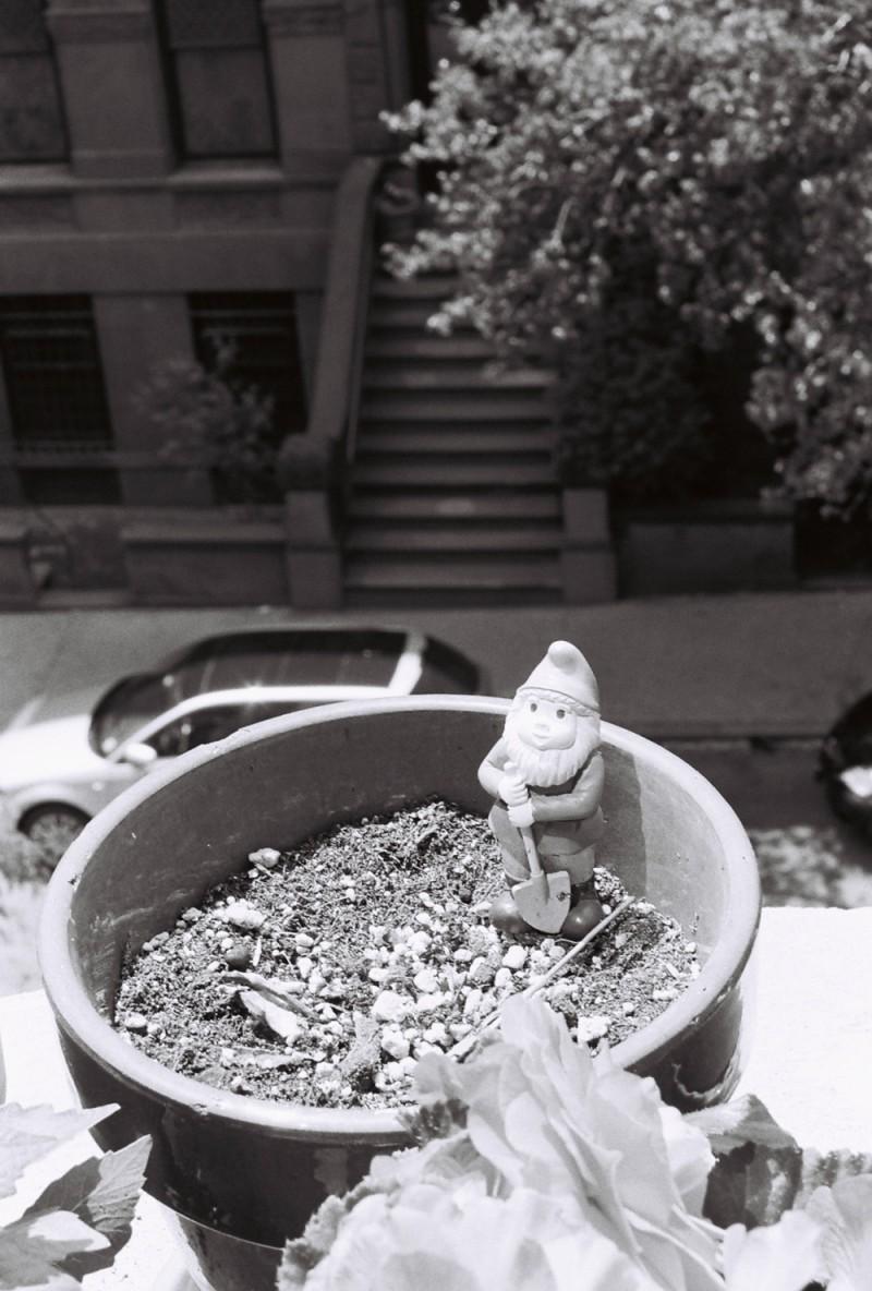 gnome in an upper west side window garden