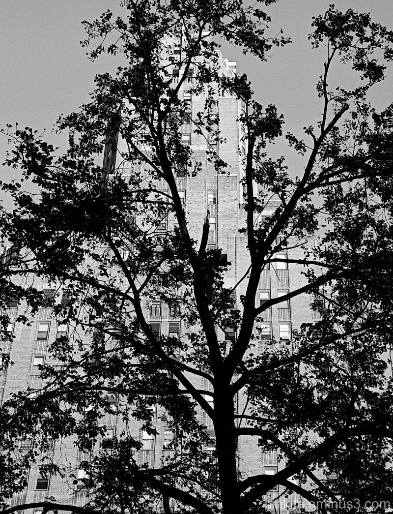 tree and building in new york city