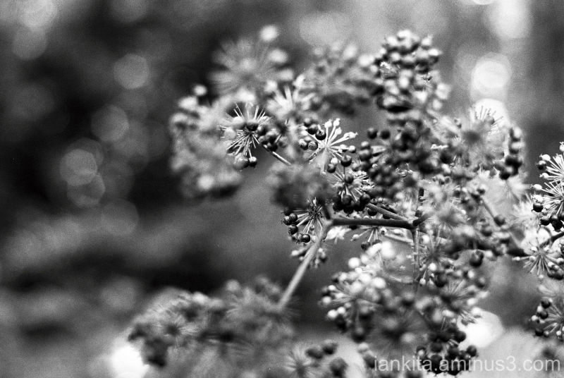 plant  closeup