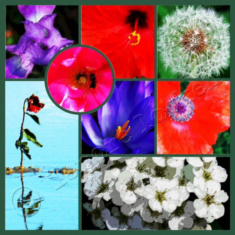 digital montage of floral photographs