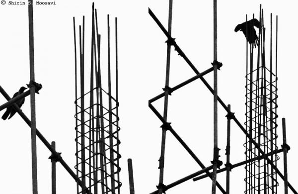 bird, silhouette, mono, scaffold, shirin moosavi