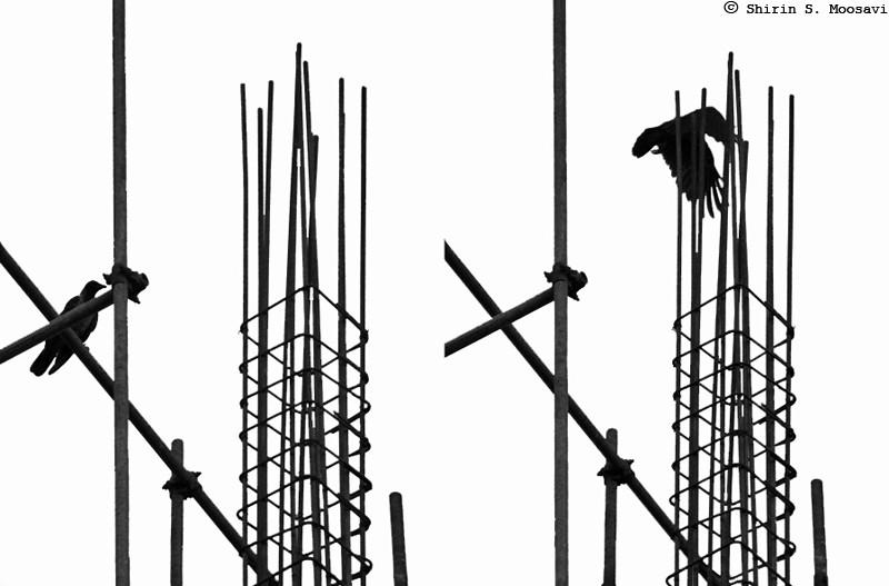 bird, silhouette, scaffold, mono, shirin moosavi