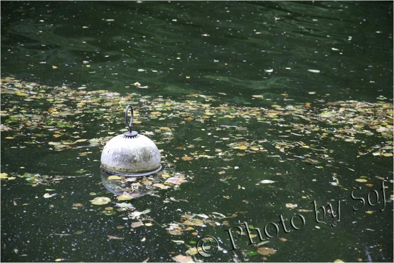 Bouée au milieu de feuilles