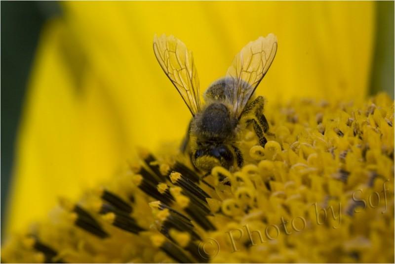 pleine de pollen