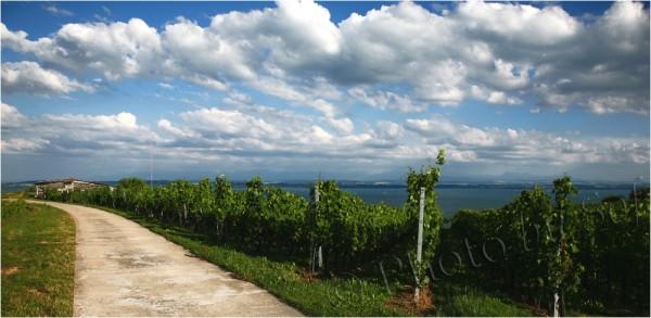 Au loin le lac de Neuchâtel