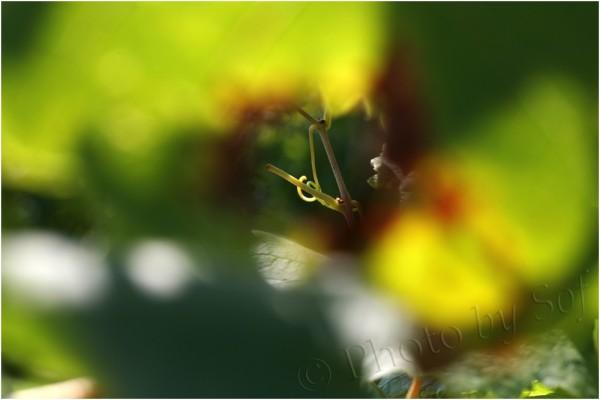 A travers un trou dans une feuille de vigne