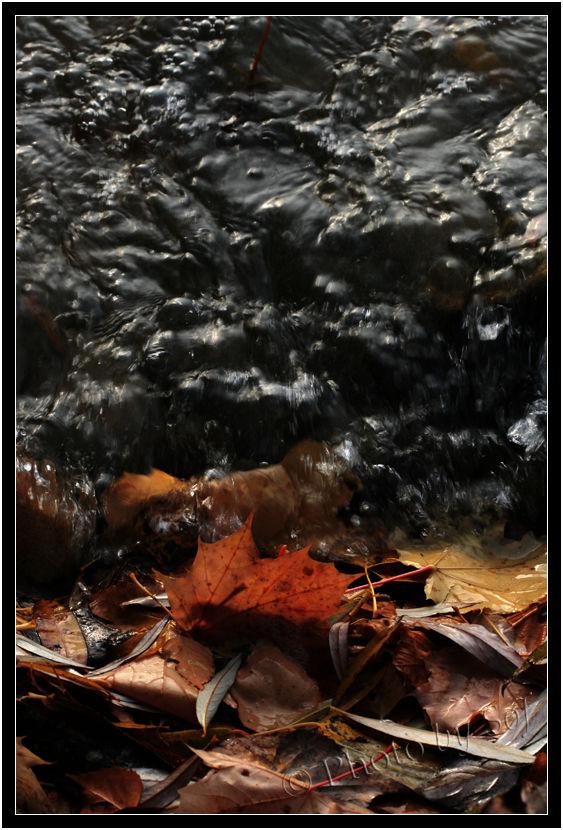 L'automne se mouille