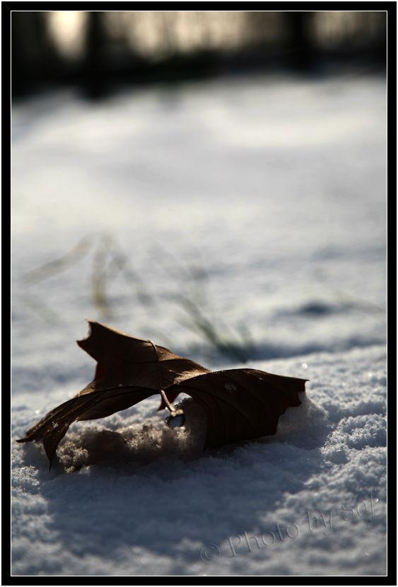 Feuille sur tapis de neige