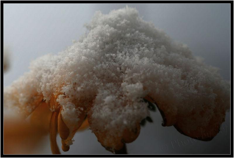 Chapeau de neige