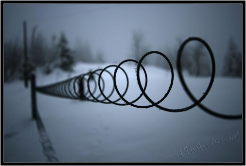 Fil de fer en hiver