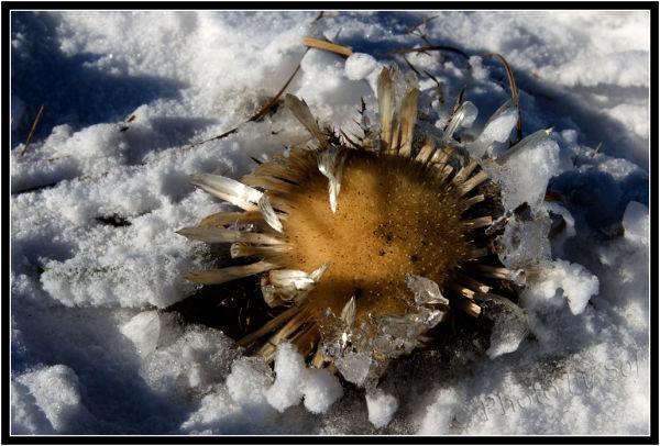 Pris dans la neige et la glace