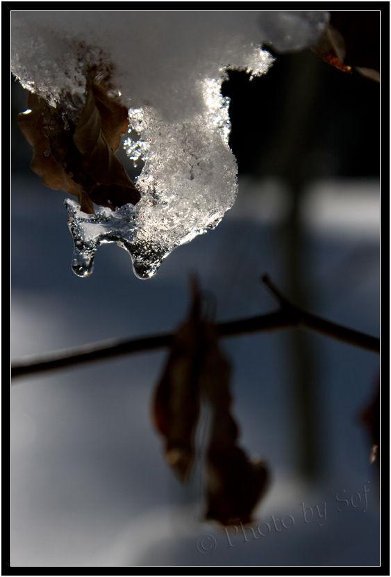Entre neige et glace