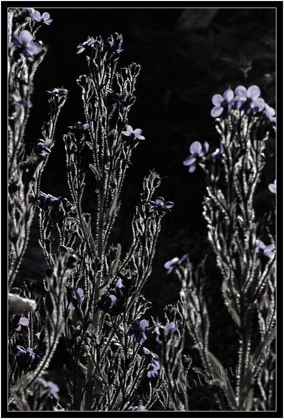 Plantes et tous ses détails