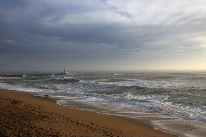 Oléron sea Atlantique