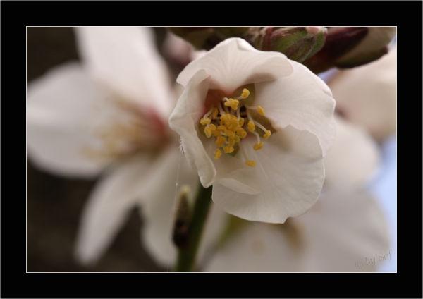 Le printemps s'installe (2)