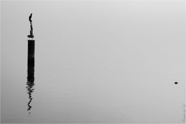 cormoran,lac,
