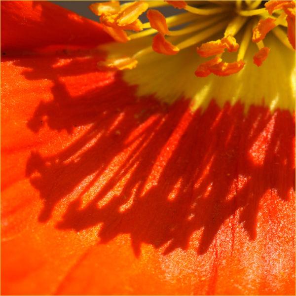 couleurs fleurs