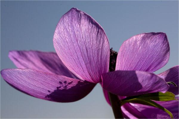 printemps couleur fleur