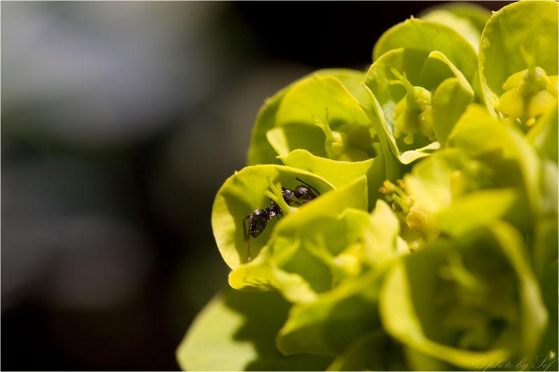 plante  printemps insectes