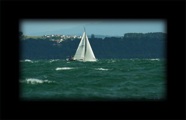 volie, lac de Neuchâtel
