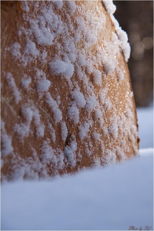 hiver neige
