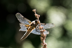 Une aile cassée