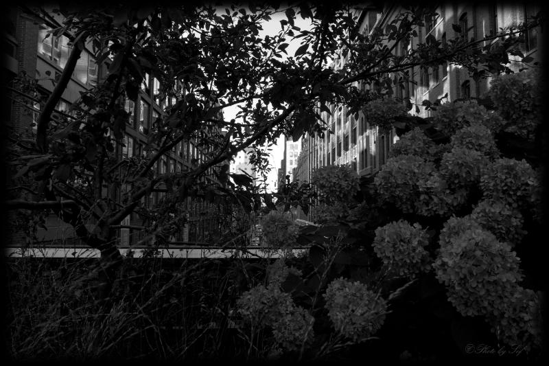 la Hight Line (2)