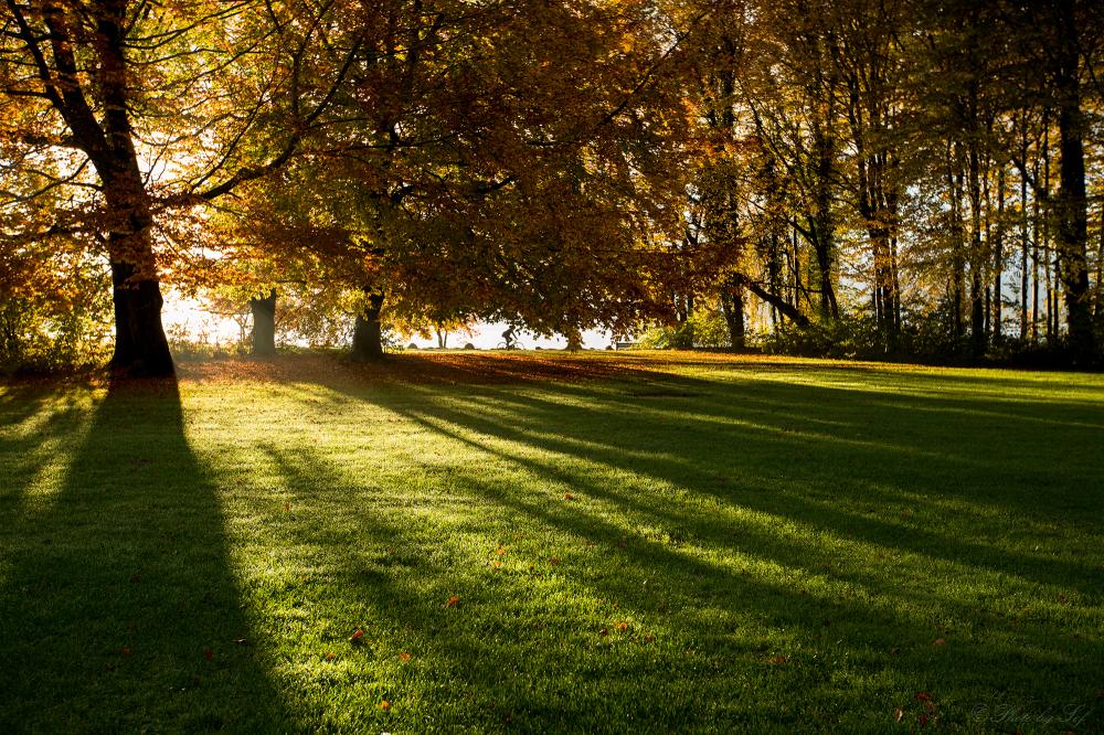 Couleurs d'automne (3)
