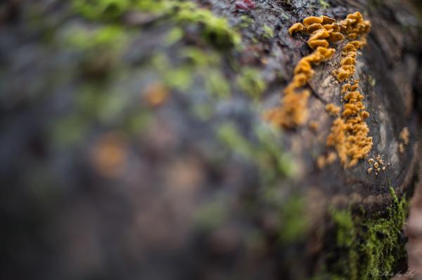 Des champignons partout
