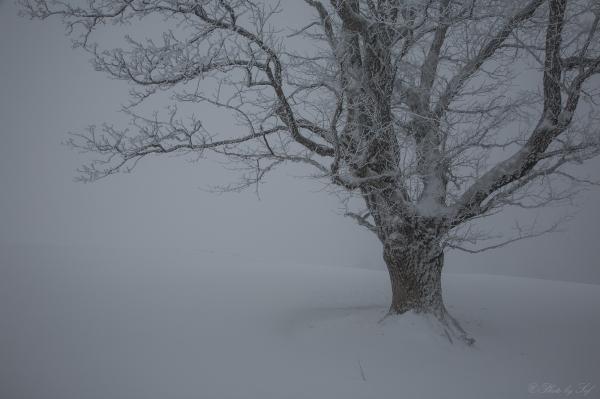 L'hiver et ses parures