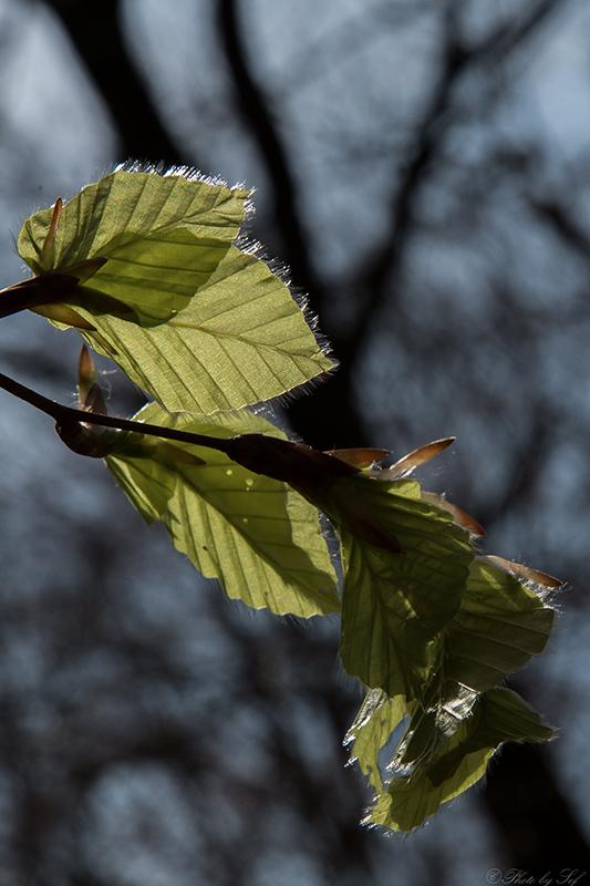 La force et la tendresse du printemps