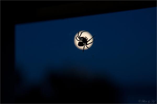 L'araignée de la pleine lune
