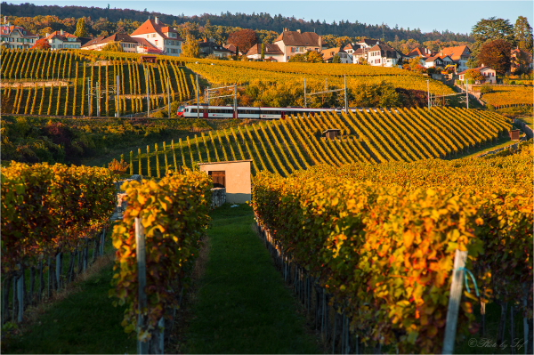 Voyage dans les vignes