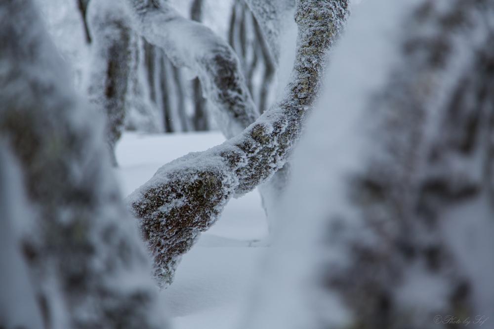 L'hiver au Creux du van