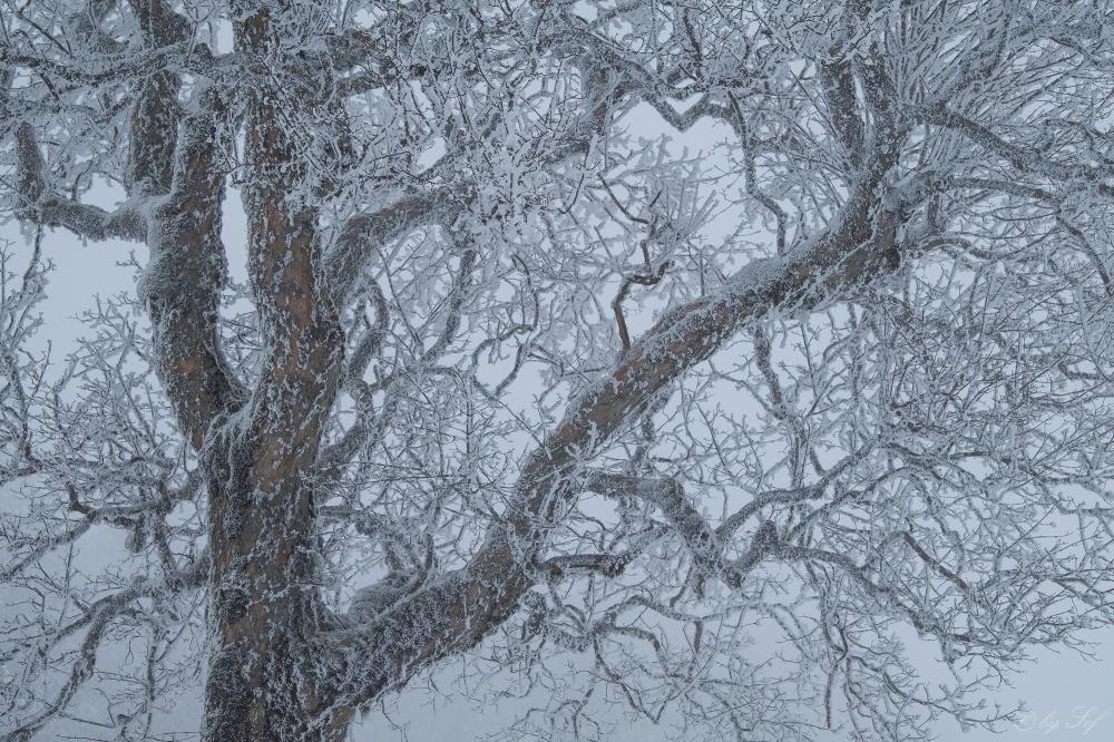 Au revoir l'hiver...