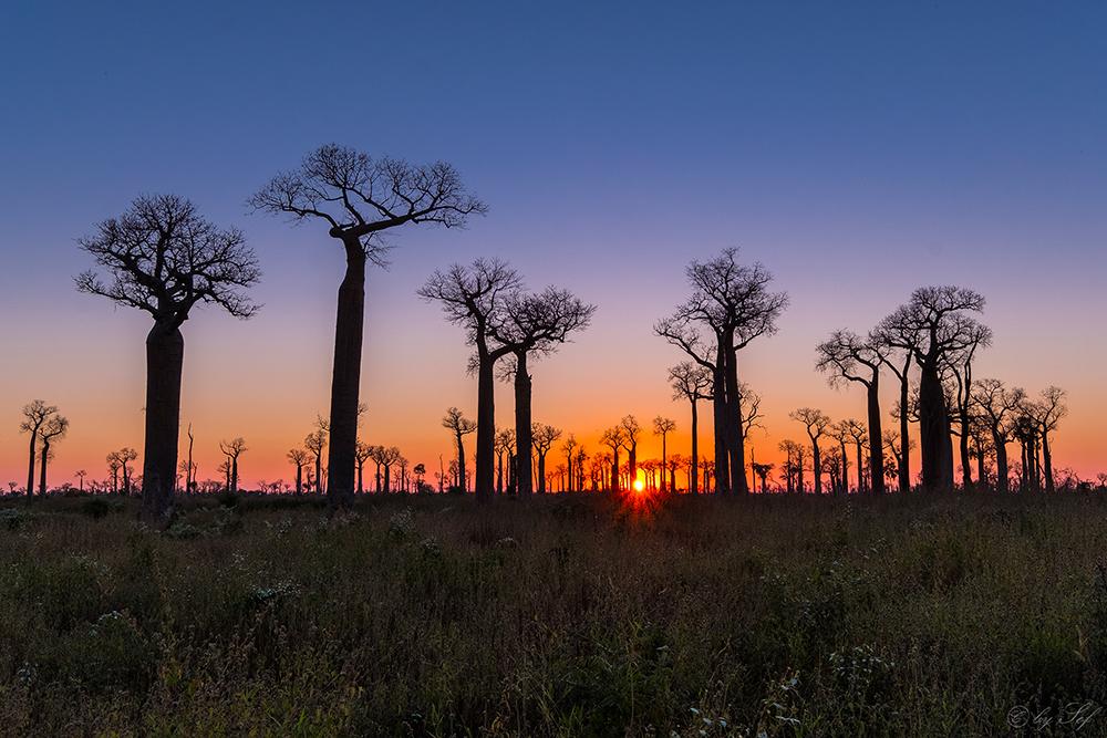 Madagascar, Baobab, Voyage