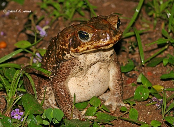 Toad in the Wet