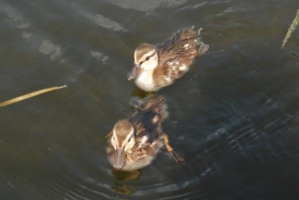 2 little ones
