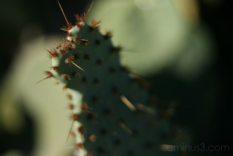 This is the dead land, this is cactus land.