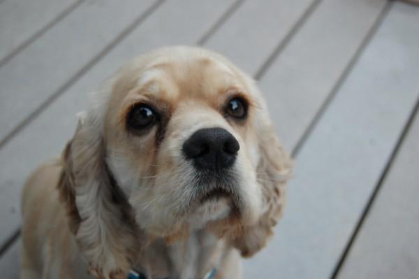 My cute dog named CODY!