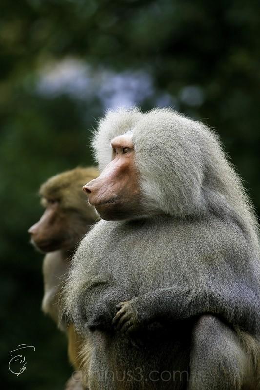 A shot from Hamburg Zoo