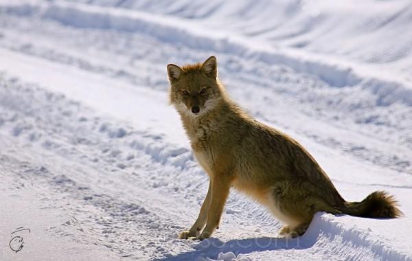 Fox View